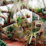 Эпифитное дерево для декора внутренних помещений