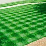 Травы применяемые для создания газонов