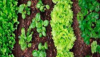 Культурообороты в оранжерейном хозяйстве, что и для чего нужны культурообороты