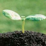 Как органические удобрения могут повлиять на положительные свойства почвы