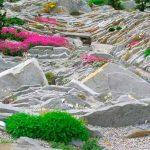 Альпийская горка своими руками