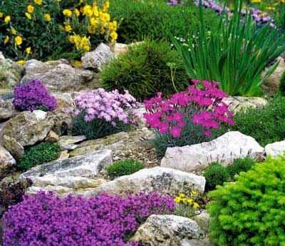 Правильное расположение камней при устройстве альпинария