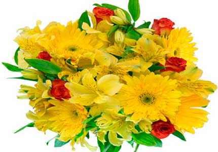 цветы и почему годятся для срезки