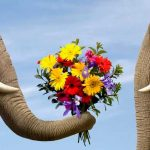 Правило цветочного этикета