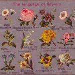 Язык цветов - создания сюжетных цветочных композиций