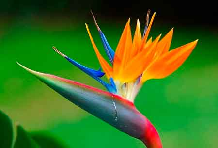Обработка цветков
