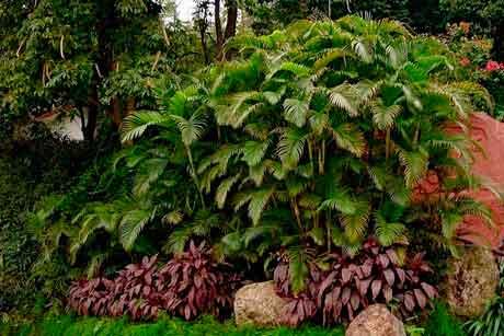 Особенности колоритных признаков растений