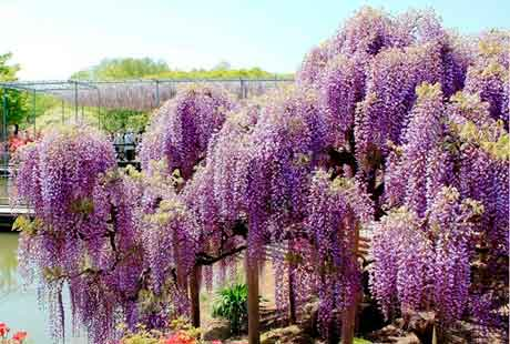 Сочитание цветочных растений