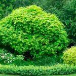 Типы колоритных садовых композиций