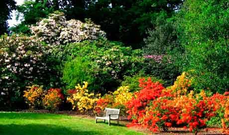 Основные виды колоритных садовых композиций