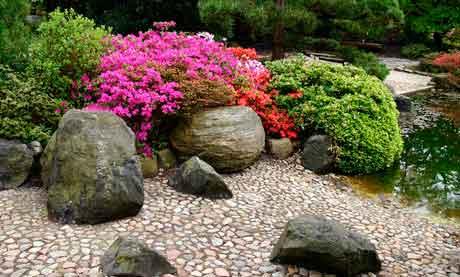 Древесных растений в цветоводстве