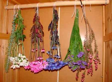 Ассортимент растений для зимних букетов