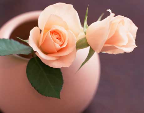 хранение срезанных цветов