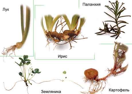 Растения с сохранением декоративных и