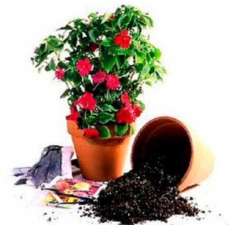 Уход за комнатными растениями и садовыми растениями