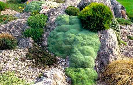 Улучшение почвы под альпийскую горку