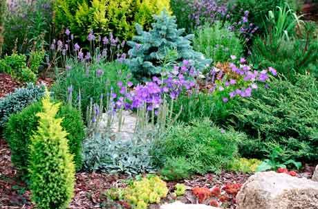 Особенности растений для альпийской горки