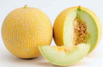 Полезные свойства дыни и диетическое использование