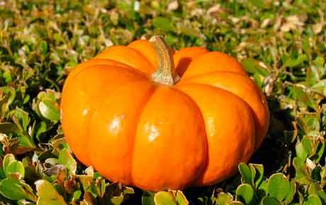 Популярные сорта тыквы