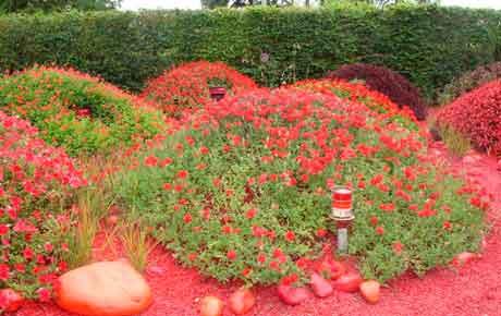 Монохромный сад фото