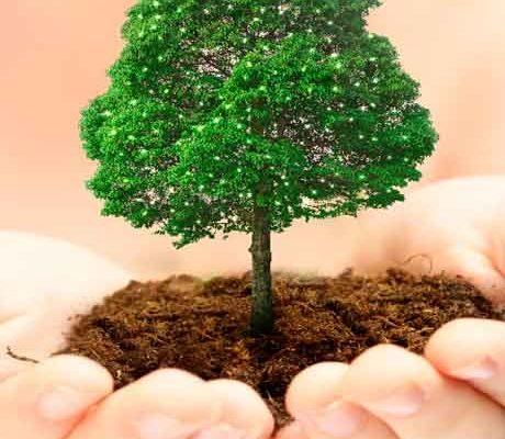 Сажаем деревья фото