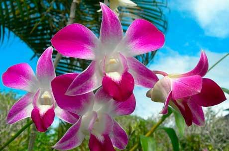 Полиплоидные формы растений фото