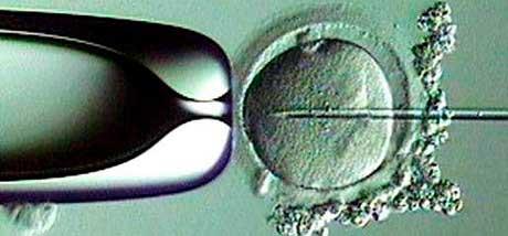 Клональное микроразмножение in vitro