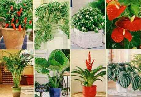 Растения можжевельник уход за ними