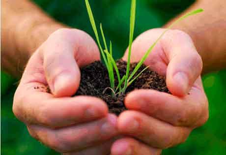 Апробация в семеноводстве