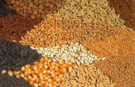 Режимы сушки семян