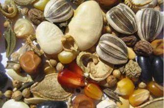 Хранение семян подсолнечника
