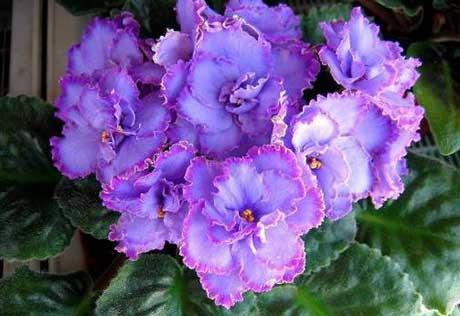 Живые цветы фиапки фото подарок на хрустальную свадьбу жене