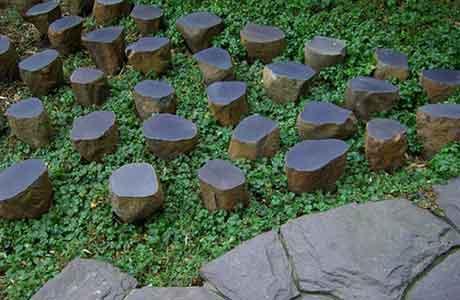 Плющ садовый фото