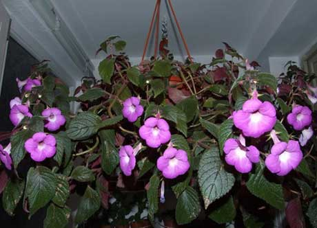 Уход за растениями в зимний период