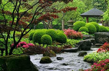 сад цветов в доме фото