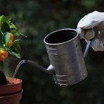 Садоводство как средство для похудения