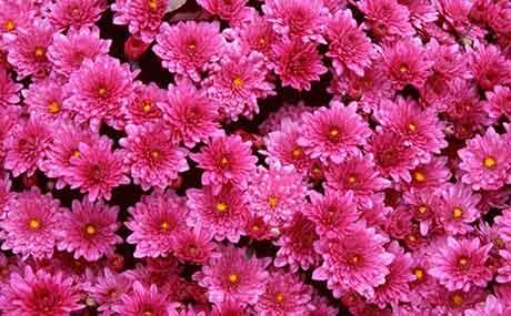 Заказать быструю доставку цветов