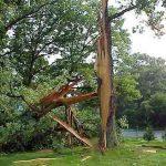Повреждение дерева молнией