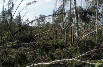 Повреждения древесных растений, вызываемые ветром