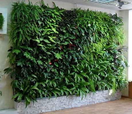Фитостена это отличный способ внутреннего озеленения.