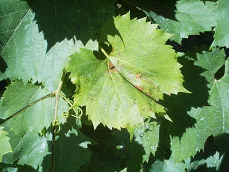Болезни древесных растений от недостатка почвенной влаги