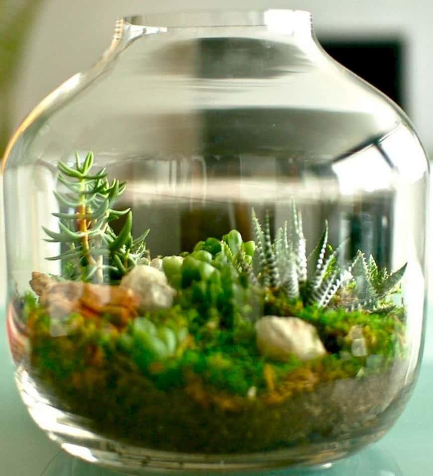 Создание сада в аквариуме.