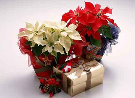 Цветочный букет в подарок