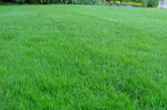 устройство садового газона