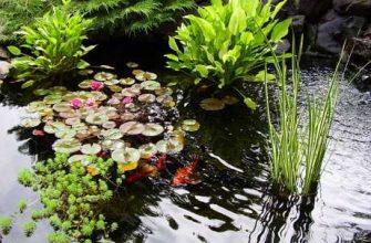Садовый пруд для рыбы