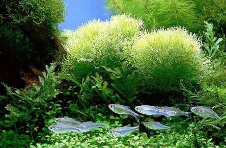 растения морей и океанов