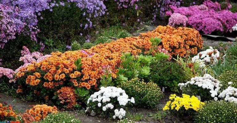 Осенний цветник фото