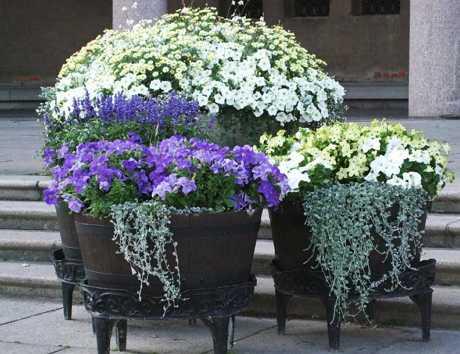 Цветы в контейнерах – оригинально и удобно!