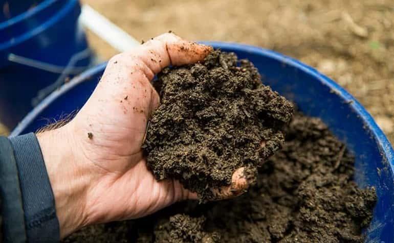 Почва для выращивания женьшеня