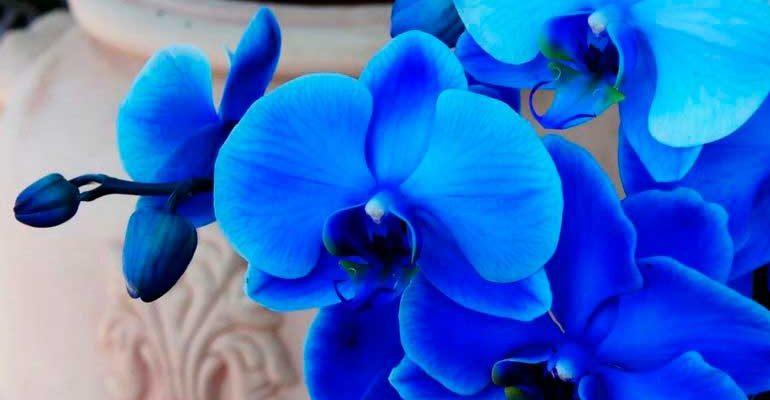 Как увеличить частоту цветения орхидеи